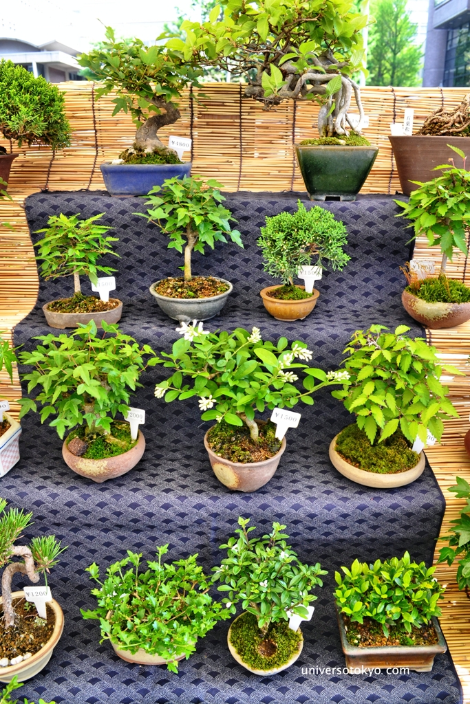 Farmers' market: Farmers' market: Beautiful bonsai from Modern Bonsai 利