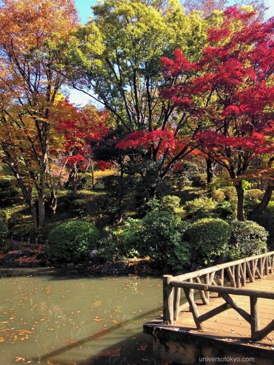 Momiji in Arisugawa Park